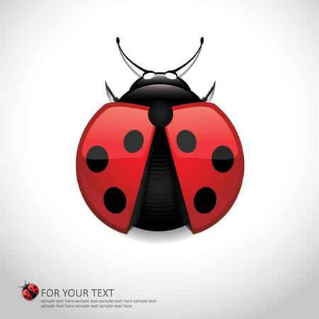 Realistic Lady Bird - vector illustration