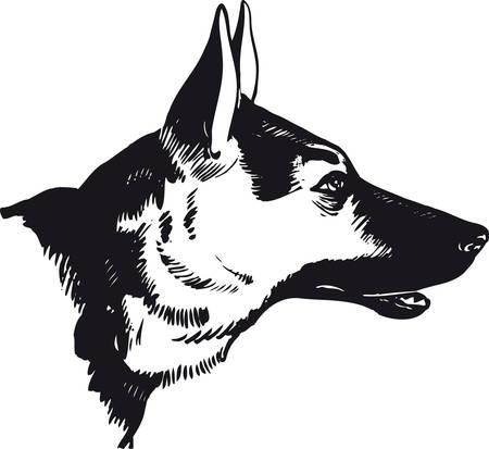 German shepherd dog, Retro Vector Illustration 일러스트