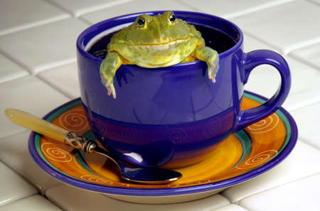 Coffee Cup with a Frog
