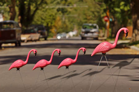 Plastic Flamingo and Babies crossing a Street