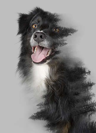 Double exposure of cute black dog and foggy forest in gray background