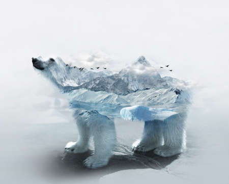 Double exposure of polar bear in arctic region and frozen mountain surrounded by white clouds and floating ice on water
