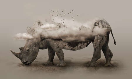 Double exposure of African wild rhino with two horns and rocky mountain surrounded by clouds. Reklamní fotografie