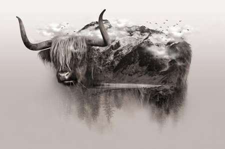 Double exposure of brown Yak and frozen mountain beside the river