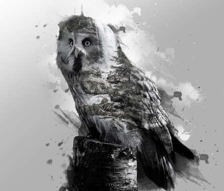 Double exposure of gray owl and natural waterfall with watercolor splash on background