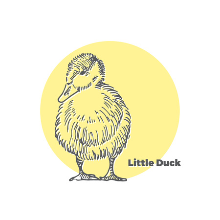 Hand Drawn Vector Sketch of Little Cute Duck with Yellow Round Background.