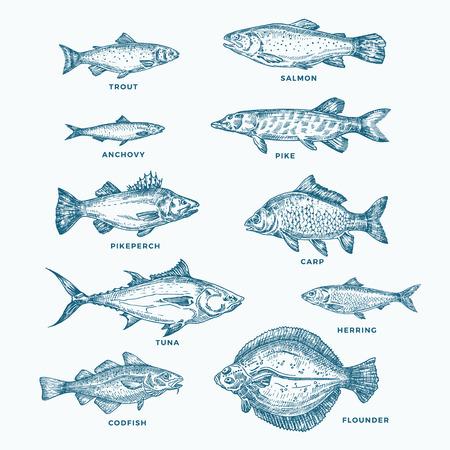 Set di dieci pesci disegnati a mano sull'oceano o sul mare e sul fiume. Una raccolta di salmone e tonno o luccio e acciuga, aringhe, trote, sagome di schizzi di carpa.