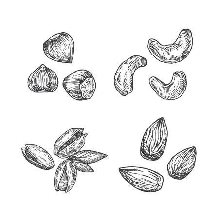 Nuts Illustration. Almond, Cashew with Hazelnut and Pistachios Abstract Sketch. Hand Drawn Vector Illustration. Isolated.