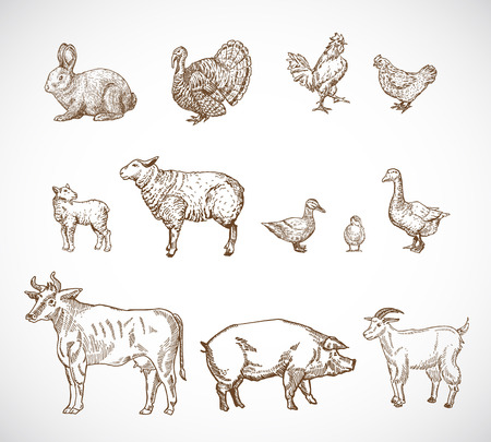 Hand Drawn Domestic Animals Set. A Collection of Pig, Cow, Goat, Lamb and Birds Sketch Silhouettes. Engraving Style Drawings. Isolated.