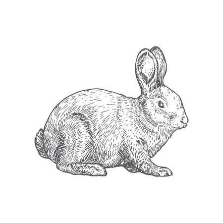 Kaninchen handgezeichnete Vektor-Illustration. Abstrakte Haustier-Skizze. Gravur Stil Zeichnung. Isoliert. Vektorgrafik