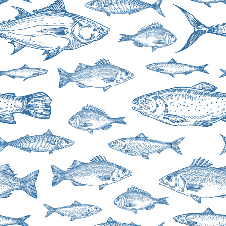 Patrón de fondo transparente de vector de peces de océano dibujado a mano. Bocetos de Anchoa, Arenques, Atún, Dorado, Caballa, Lubina y Salmones o Plantilla de Portada en Color Azul. Aislado.
