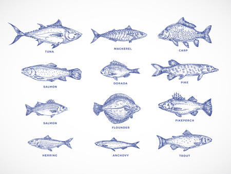 Hand Drawn Ocean, Sea, River and Lake Fishes Set. A Collection of Salmon and Tuna or Pike and Anchovy, Herring, Trout, Mackerel and Dorado Sketches Silhouettes. Isolated Illustrations