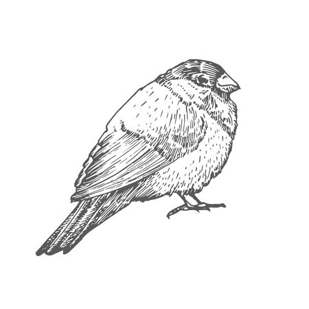 Hand Drawn Christmas Bullfinch Bird Vector Illustration. Abstract Rustic Sketch. Winter Holiday Engraving Style Drawing. Stock Illustratie