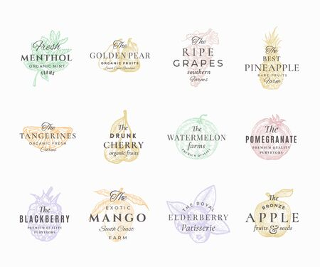 Premium Quality Fruits, Berries and Spices Elegant Labels Set. Abstract Vector Signs, Symbols or  Templates. Hand Drawn Food Sketches with Retro Typography. Vintage Emblems Collection. Illustration