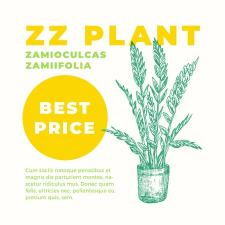 ZZ or Zuzu Plant Abstract Vector Sign or Label Template. Hand Drawn Potted Zamioculcas Sillhouette with Modern Typography Home Gardening Card. Houseplant Advertising Emblem or Package Label. Isolated. Banque d'images - 144174691