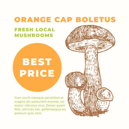 Orange Cap Boletus Abstract Vector Sign Template. Hand Drawn Mushrooms Sillhouette with Modern Typography Card. Advertising Emblem or Package Label.