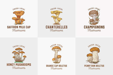 Fresh Local Mushrooms Abstract Signs, Symbols or   Templates Collection. Hand Drawn Colorful Champignons, Chanterelles, Saffron Milk Cap, etc. with Typography. Edible Plant Vector Concept.