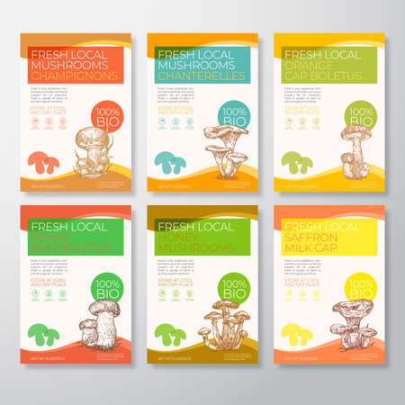 Fresh Local Mushrooms Label Templates Collection. Abstract Vector Packaging Design Layouts Set. Modern Typography Banners with Hand Drawn Chanterelles, Champignons, Boletus, etc. Sketch Backgrounds