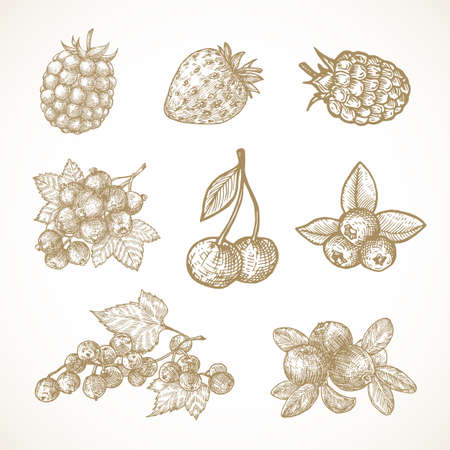 Hand Drawn Berries Vector Illustrations Collection. Cherry, Red-Ribes, Currant, Cranberry, Strawberry and Elderberry Sketches Set. Natural Food Doodles. Isolated