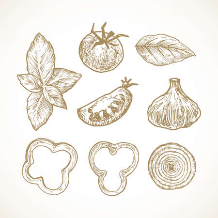 Hand Drawn Vegetables and Herbs Vector Illustrations Collection. Tomato, Basil, Bell Pepper and Onion Rings and Garlic Sketches Set. Natural Food Doodles. Isolated
