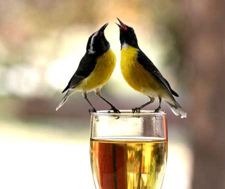 bird song: in good mood