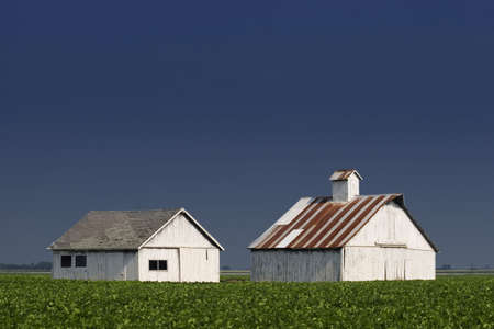 forground: Whitewashed farm buildings with a leafy crop in the forground.