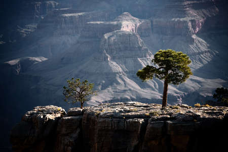 Trees on a ridge inside the Grand Canyon 版權商用圖片