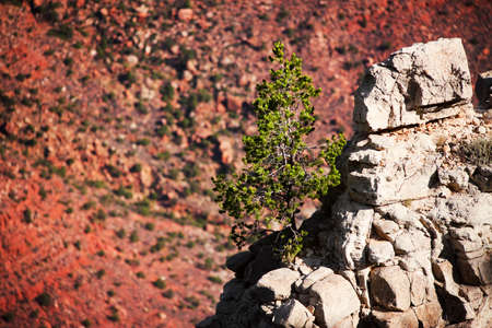 Pine tree on a rocky outcropping in the Grand canyon 版權商用圖片