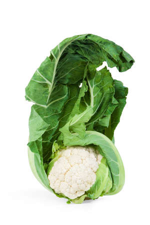 Head of cauliflower with green leaf on white background