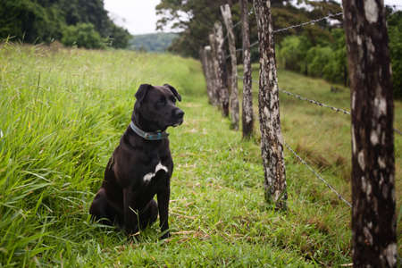 watchful: Watchful dog looking through a barbed wire fence