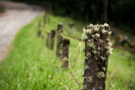 Epiphytes on fence post in Costa Rica photo