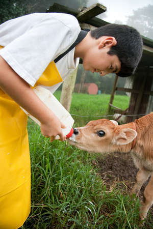 rican: Young boy in apron working on Costa Rican dairy farm
