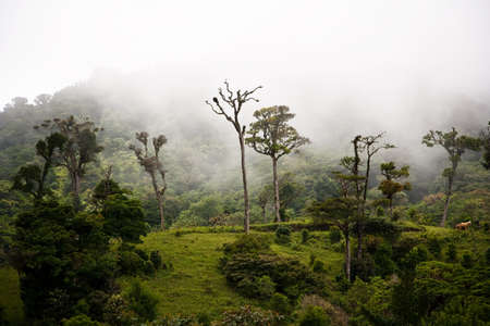 Tall trees in the Costa Rican cloud forest photo