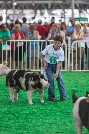 attendee: DES MOINES, IA USA - AUGUST 10: Unidentified teen exercising and showing swine at Iowa State Fair on August 10, 2014 in Des Moines, Iowa, USA.