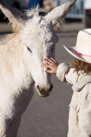 baby ass: White Baby Burro with young girl in Oatman Arizona USA