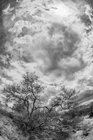 monsoon clouds: Black and white wide angle view of dry shrubs Stock Photo