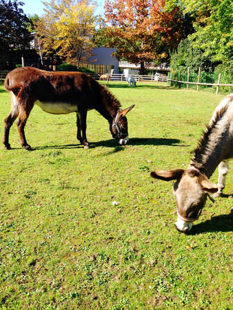 trusting donkeys in a small animal park