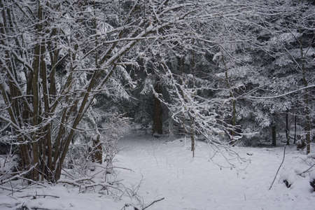 winter landscape and trees covered with snow