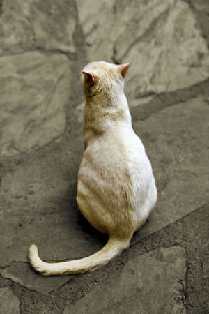 White cat sit down on the stone floor  photo