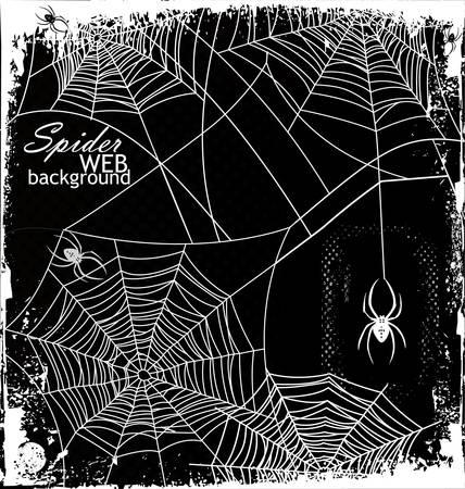 spinnennetz: Spinnennetzhintergrund