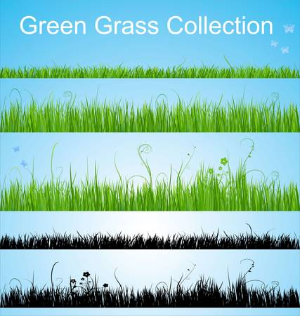 lawn: Vector grass collection Illustration