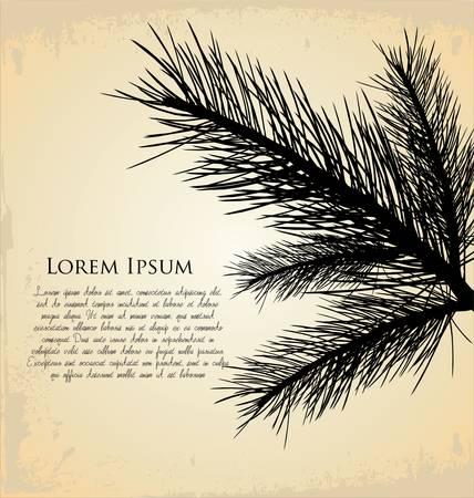 pine branch: pine branch background