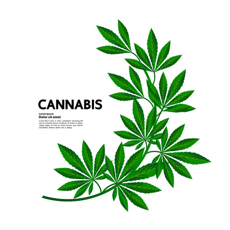 Cannabis for medical vector.