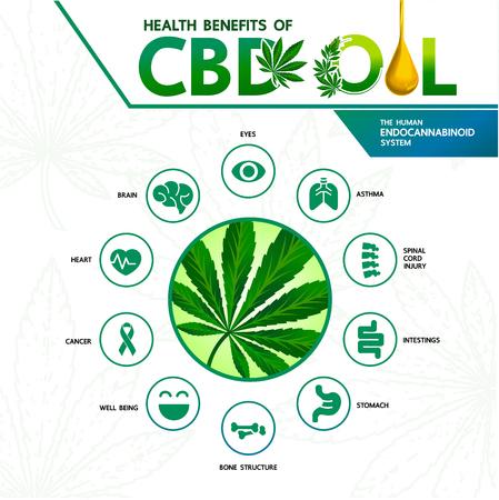 Benefici della cannabis per l'illustrazione di vettore di salute. Vettoriali