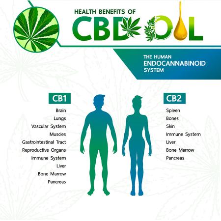 Cannabis benefits for health vector illustration. Ilustración de vector
