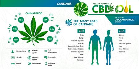 Avantages du cannabis pour l'illustration vectorielle de santé. Vecteurs