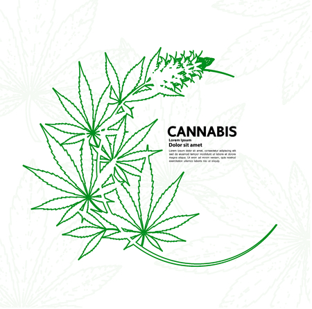 Cannabis plant illustration.