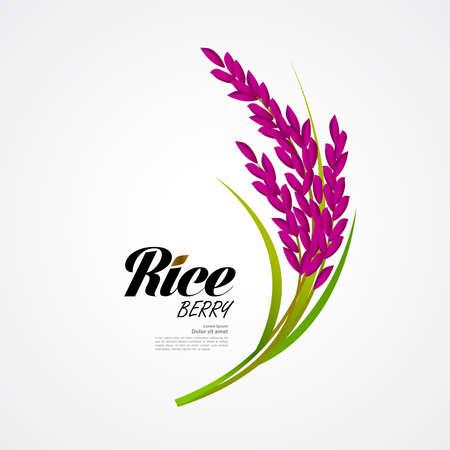 Premium Rice great quality design concept  vector. Ilustrace