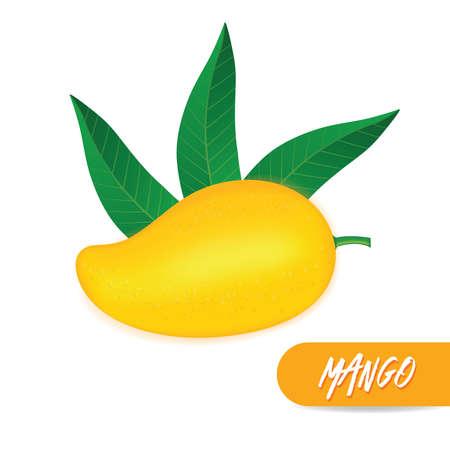 Mango fresh fruit graphic illustration. Ilustrace