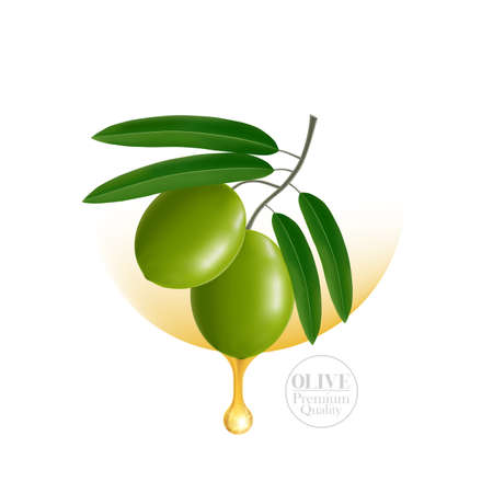 The fresh Olive oil elegant vector illustration. Ilustracja